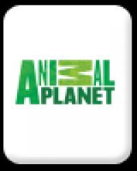 Animal Planet, Romania